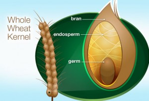 what is the largest part of the grain kernel